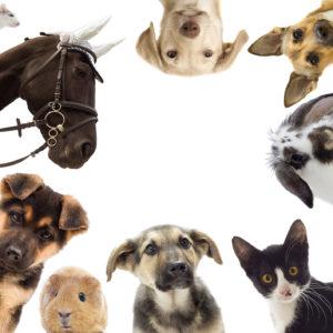 Produkte für Ihr Tier